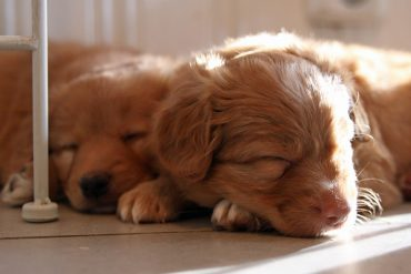 Pennut rekisteröity – Puppies registered